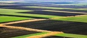 Grande azienda agricola in Serbia